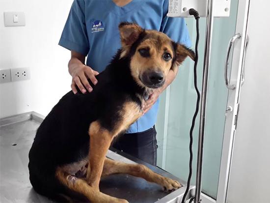 Leo at the vet. Photo Credit: Meagan Penman