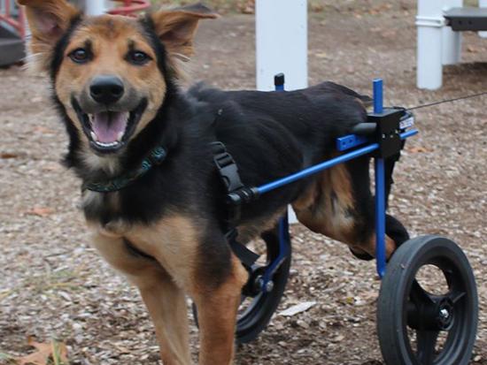 Leo in wheelchair. Photo Credit: Meagan Penman