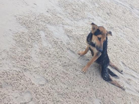 Leo on the Beach. Photo Credit: Meagan Penman