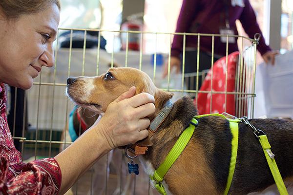 Edie Falco. Photo Credit: Best Friends Animal Society