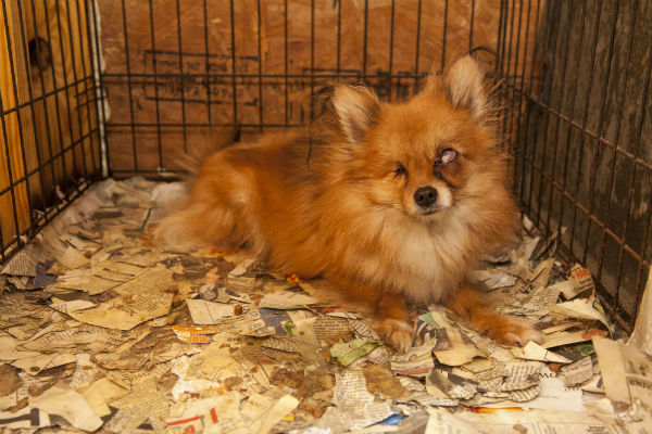 ASPCA Raid Alabama - Copy