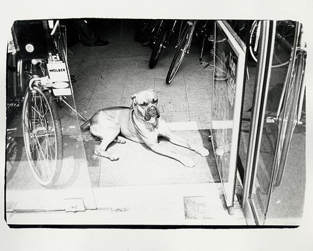 Dog in Bicycle Store 1982. Starting bid $1,800. Christie's Image LTD. 2015