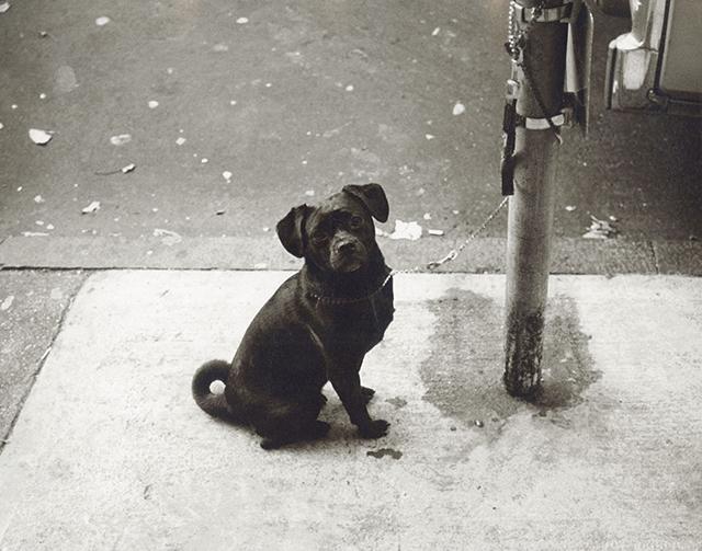 Titled Dog from 1982. Starting Bid $2,000. Christie's Image LTD. 2015