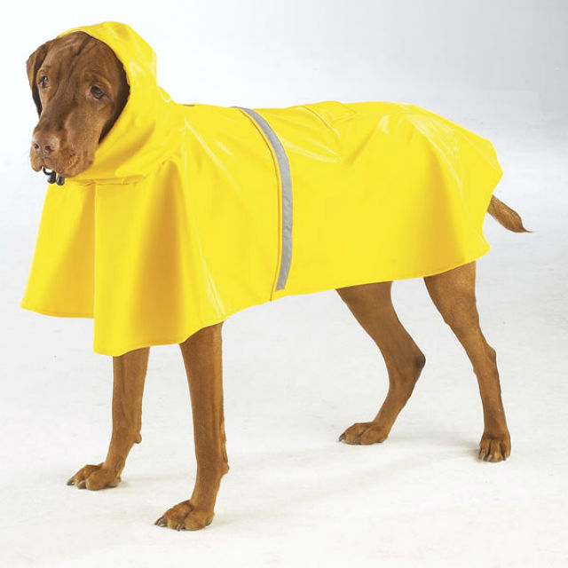 rain-jacket-with-reflective-strip-yellow-2 resized