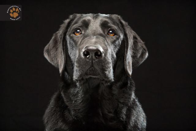 black dog1