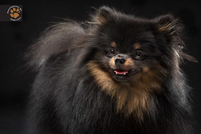 black dog4