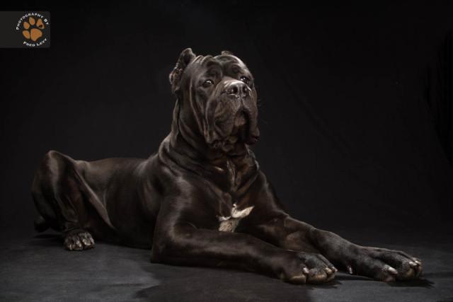 black dog6