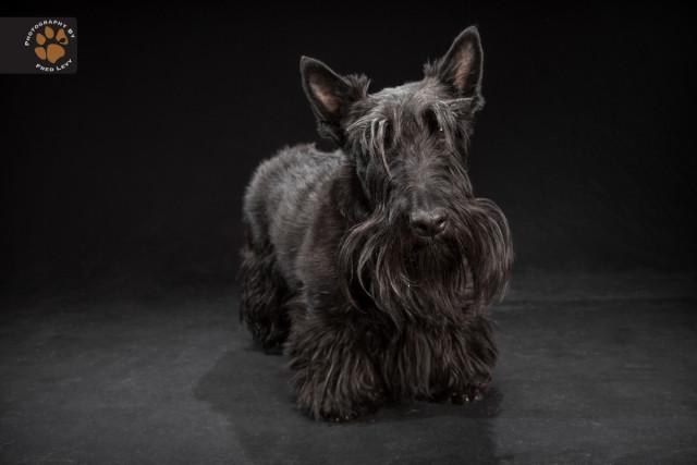 black dog9