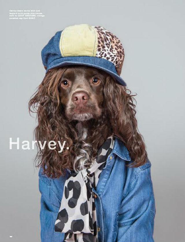 LOVE magazine Harvey