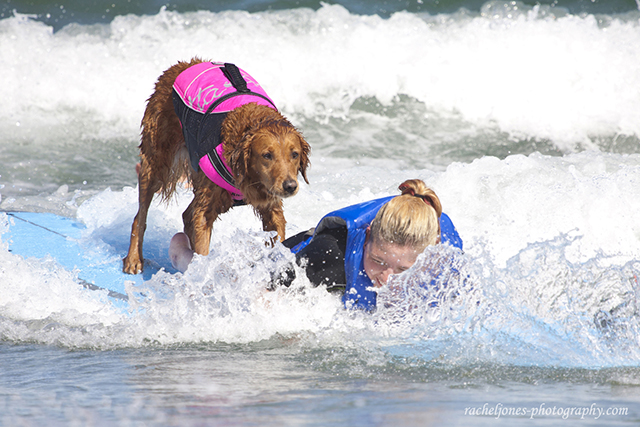 Ricochet surf dog 2
