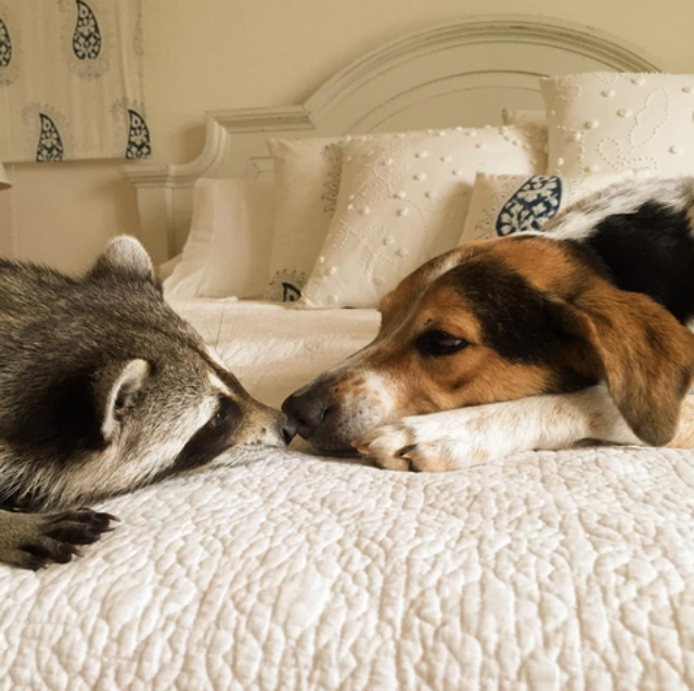 Pumpkin and Oreo enamored with each other. Image via Instagram.