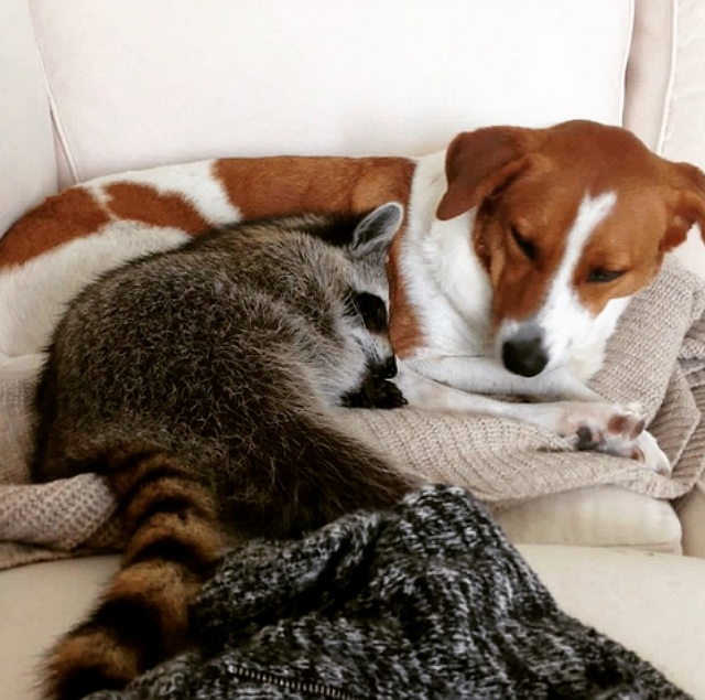 Toffee and Pumpkin cuddling. Image via Instagram.