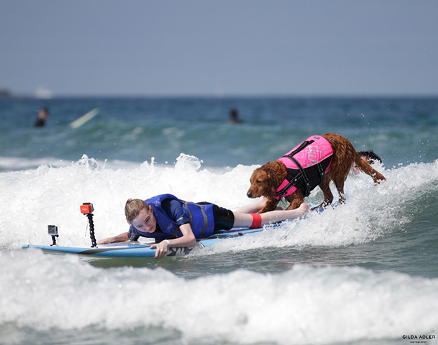 ricochet surf dog1