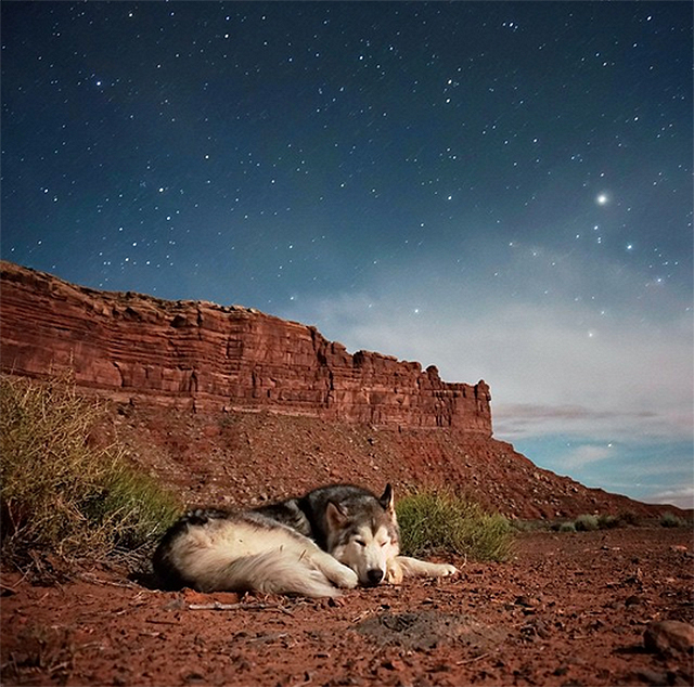 Loki and Wolfdog