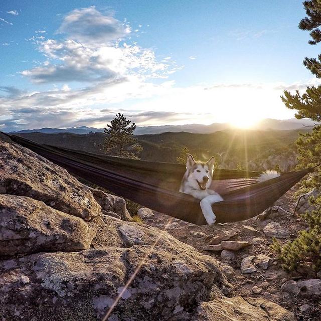 loki wolfdog