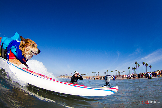 SurfCitySurfDog2015-132 resized