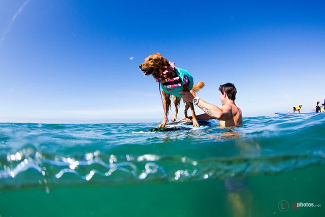 SurfCitySurfDog2015-159 resized