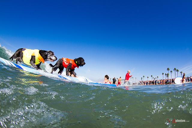 SurfCitySurfDog2015-185 resized