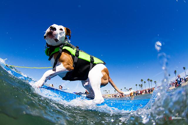 SurfCitySurfDog2015-255 resized