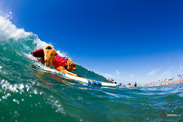 SurfCitySurfDog2015-272 resized