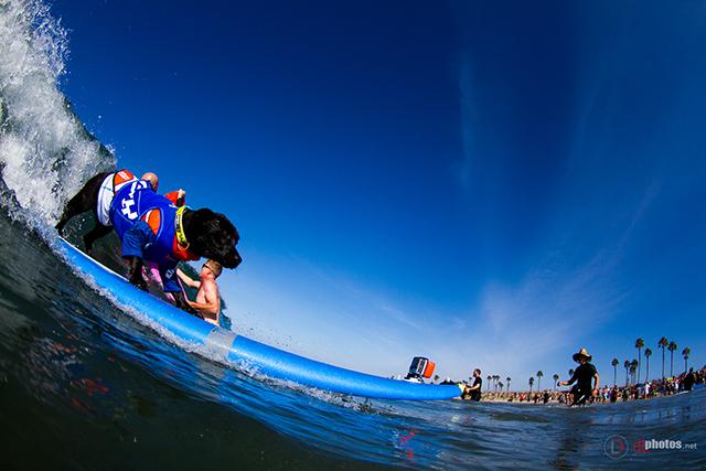 SurfCitySurfDog2015-29 resized