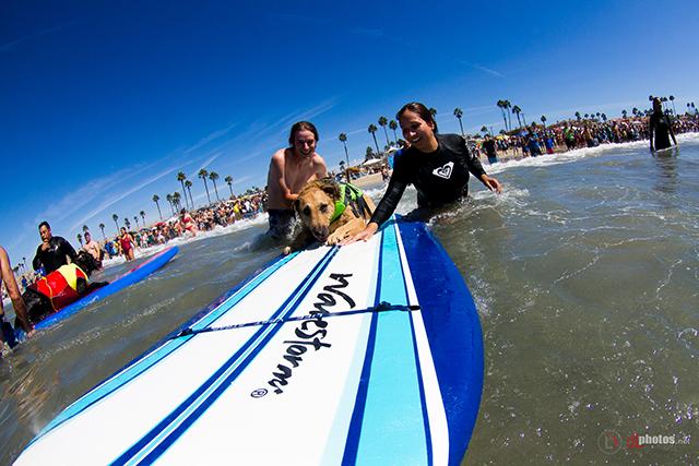 SurfCitySurfDog2015-310 resized