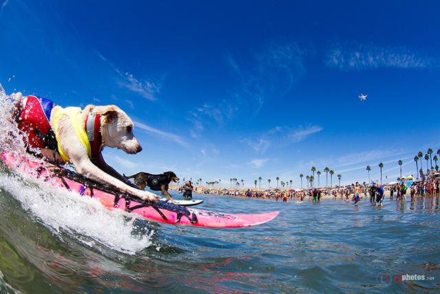 SurfCitySurfDog2015-406 resized