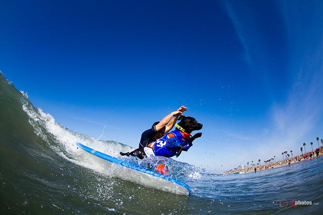 SurfCitySurfDog2015-42 resized