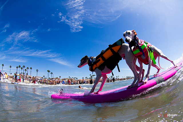 SurfCitySurfDog2015-499 resized