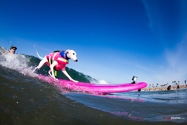 SurfCitySurfDog2015-6 resized