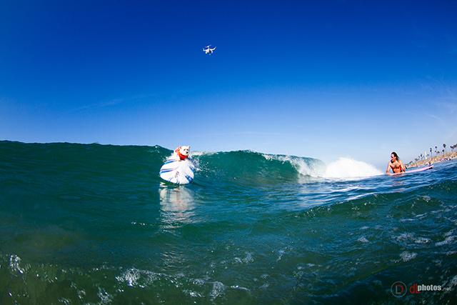 SurfCitySurfDog2015-62 resized