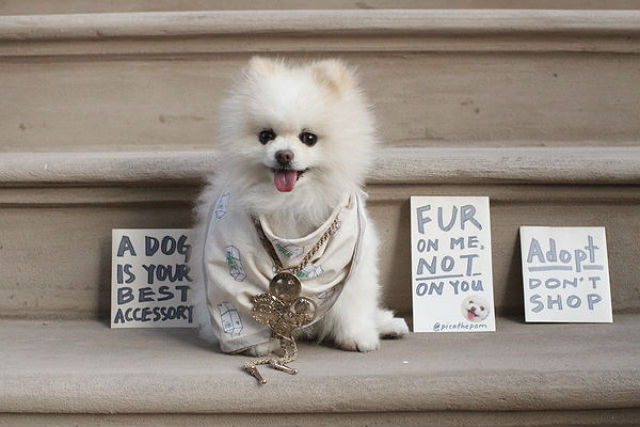 Pica the Pom in a Chanel necklace and Marchand Des Legumes bandana