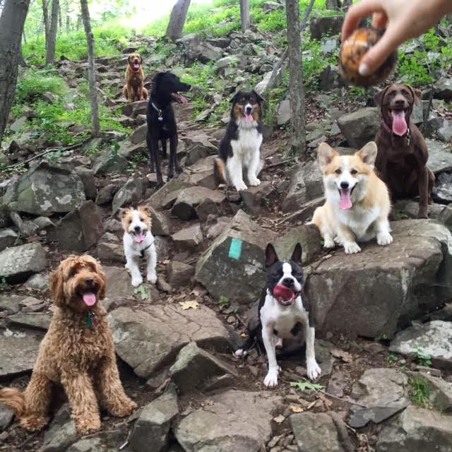 my dog hikes 2