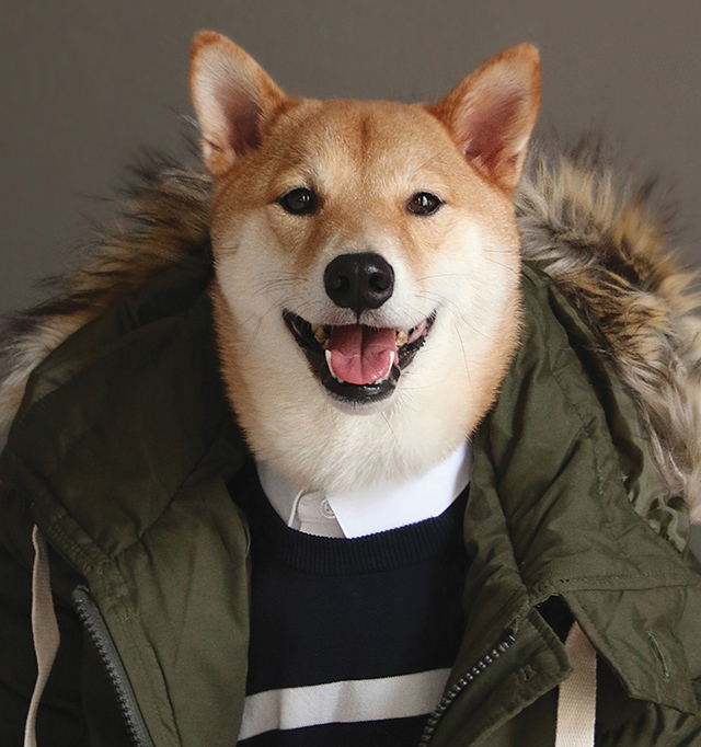 Menswear Dog from the book Menswear Dog Presents the New Classics