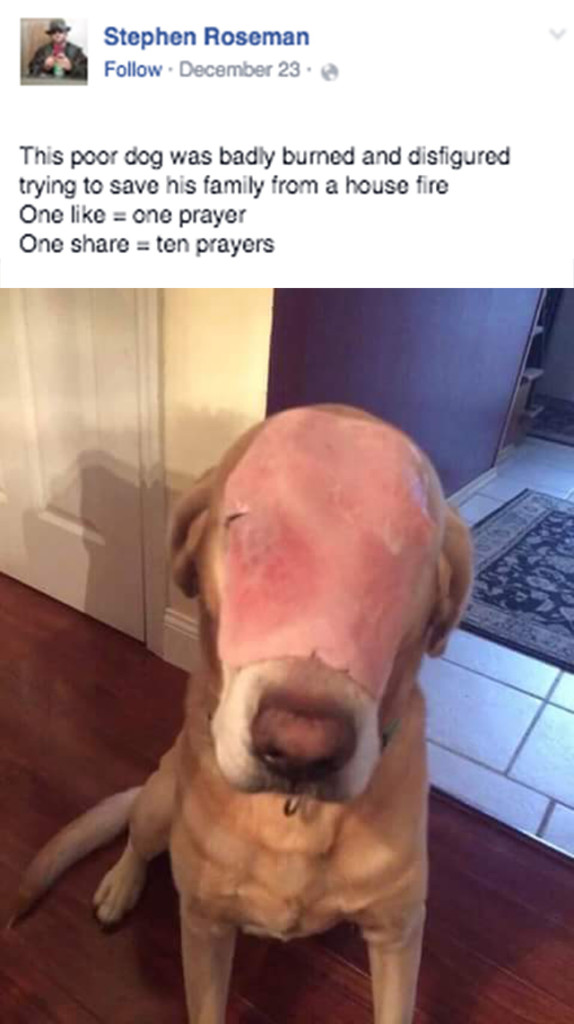 dog with ham on his face 1