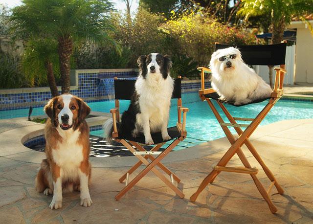 Doritos Dogs 2