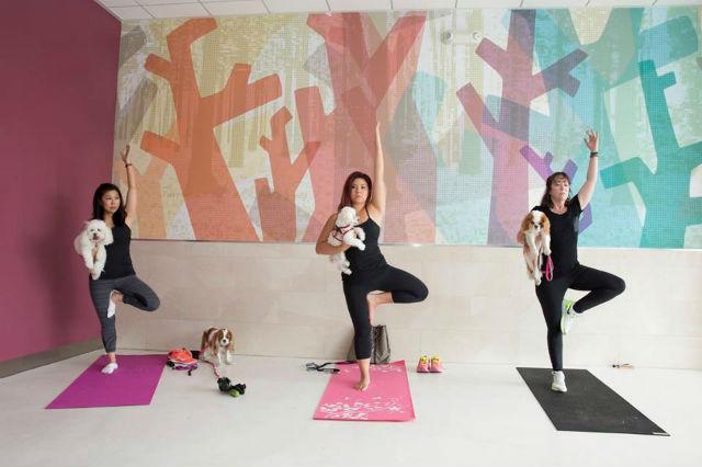 healthy spot fitness 5